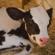 مع الفلاح : الأمراض الشائعة عند الأبقار