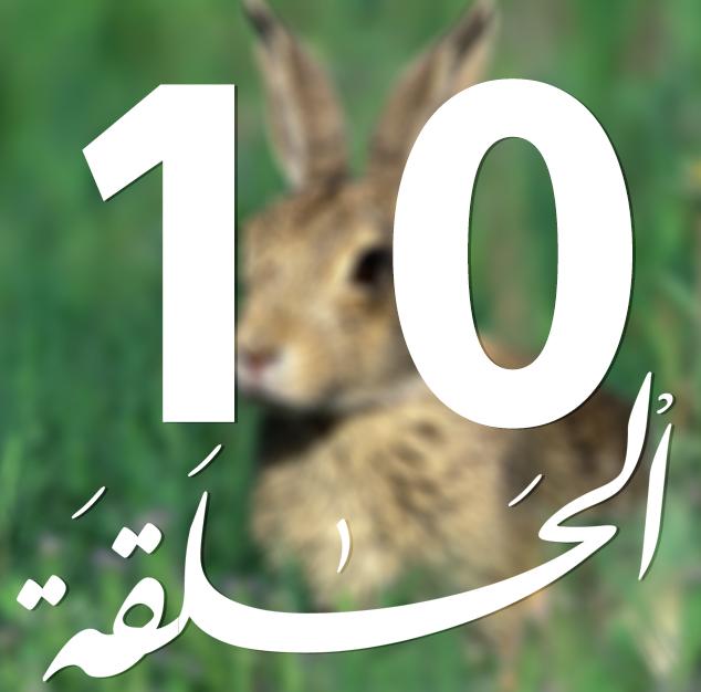 تربية الأرانب بالمغرب واقع و آفاق