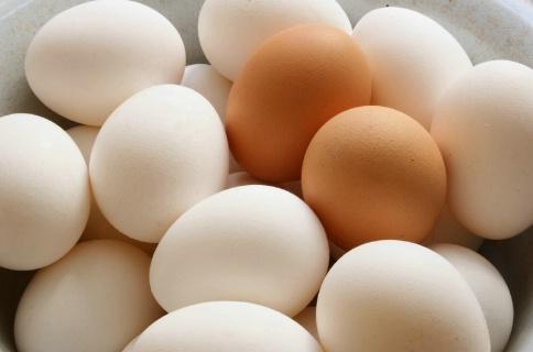 الجمعية الوطنية لمنتجي بيض الاستهلاك و الدورة السابعة لليوم الوطني للبيض.