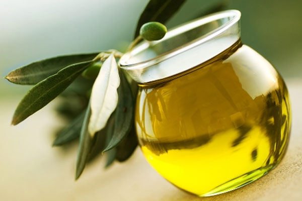 الفوائد العلاجية لشجرة الزيتون المباركة