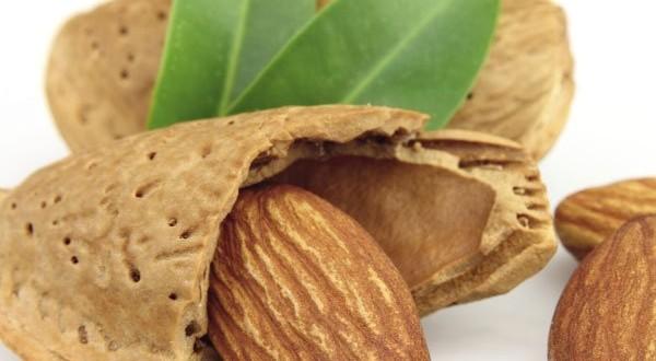 نصائح تقنية حول انتاج شجرة اللوز  :