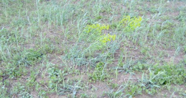 الطرق الناجعة لمقاومة الأعشاب الضارة