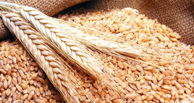 بنك المغرب راجع توقعه لحجم إنتاج الحبوب خلال العام الحالي من 70 مليون قنطار إلى 38 مليون قنطار.