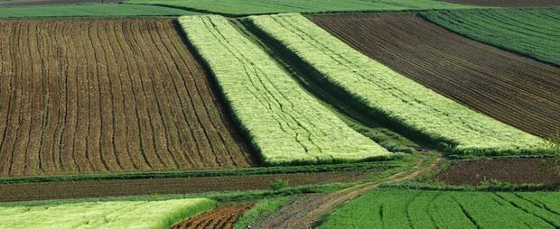 125 ألف هكتار هي المساحة المخصصة لزارعة الحبوب بجهة مكناس- تافيلالت