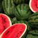 Note de veille : Filière pastèque