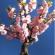 التقنيات الفلاحية لشجرة اللوز