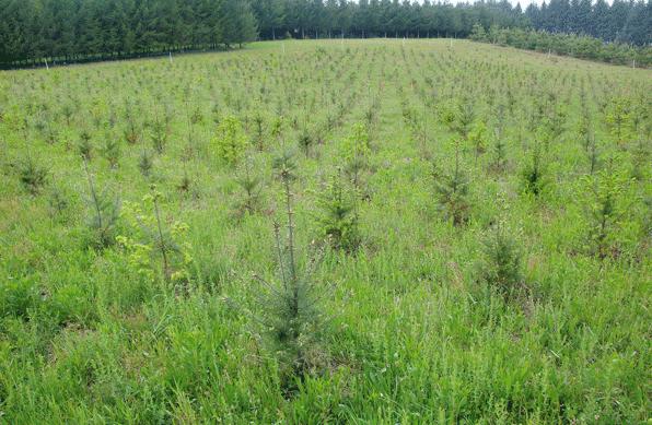 إطلاق أشغال إعادة التشجير الغابوي بغلاف مالي قدره 29 مليون درهم.