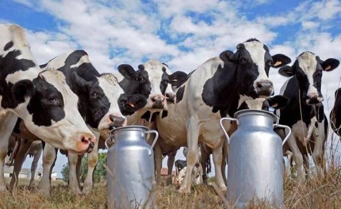 التهابات الضرع عند الأبقار
