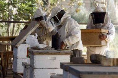 تراجع ملحوظ في إنتاج العسل بالمغرب خلال موسم 2014