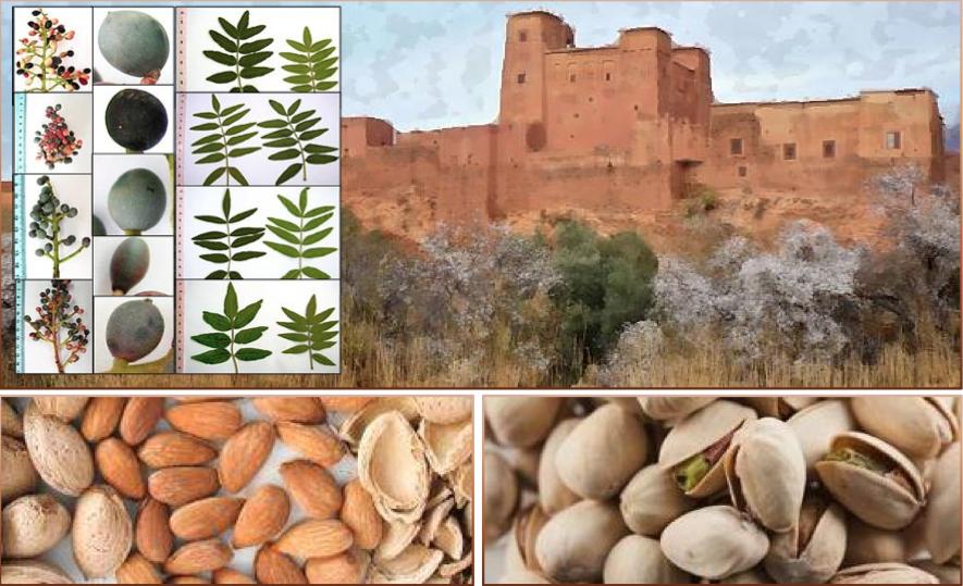 XVI RÉUNION DU GREMPA Meknès (Maroc), 12-14 mai 2015