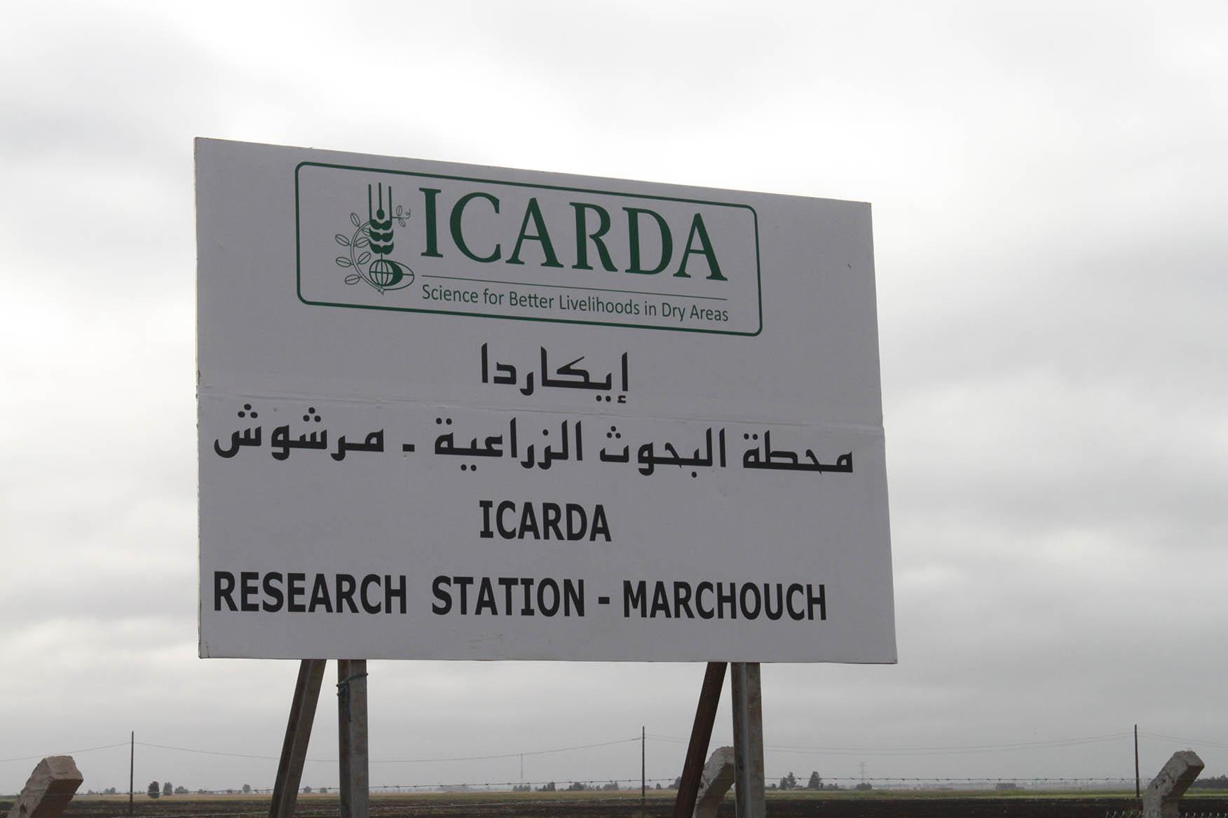 جولة بمرشوش للتعرف على أهم التجارب و الأصناف المستنبطة من طرف ICARDA