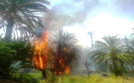 حريق يأتي على أكثر من 300 نخلة بواحة أسرير دون تسجيل أي خسائر بشرية