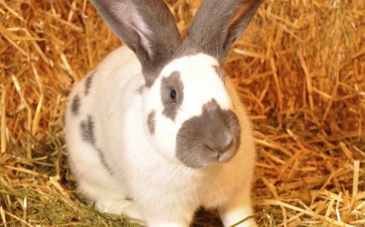 دراسة إقتصادية لخلق مشروع تربية الأرانب