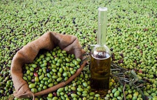 طرق إنتاج زيت الزيتون.