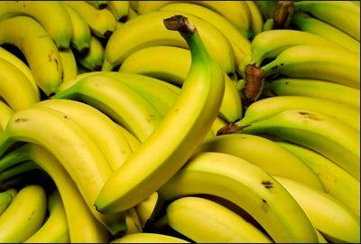 إنتاج الموز الطبيعي BIO ذو جودة عالية بمنطقة تامري ضواحي أكادير.