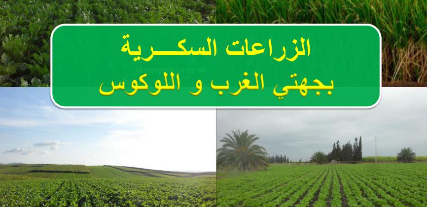 يوم تواصلي بسيدي قاسم حول تطوير الزراعة السكرية.