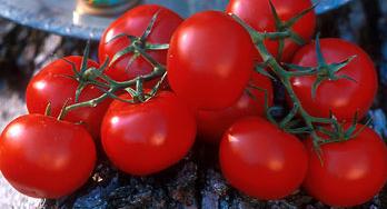 الطماطم المغربية توحد إسبانيا و إيطاليا و دعوات لتدابير حمائية ضدها.