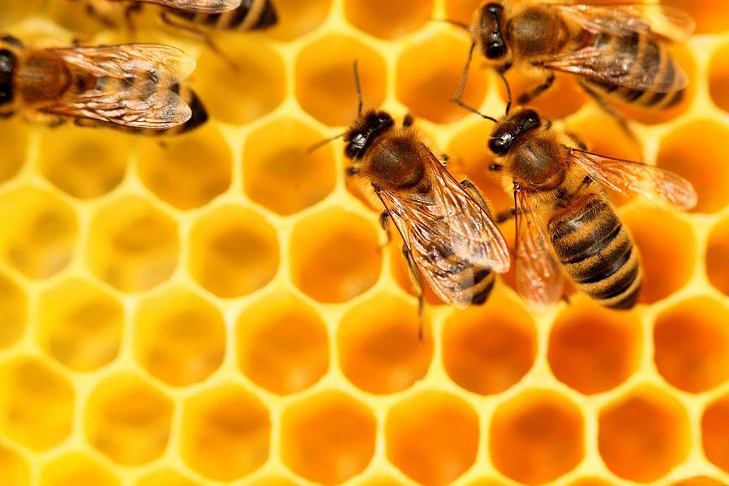 """انطلاق فعاليات المعرض السنوي الرابع للعسل والمنتوجات الفلاحية تحت شعار """"العسل .. غداء و شفاء"""""""