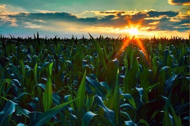المساحة الإجمالية المبرمجة للزراعات الخريفية على مستوى جهة فاس – بولمان تفوق 268 ألف هكتار