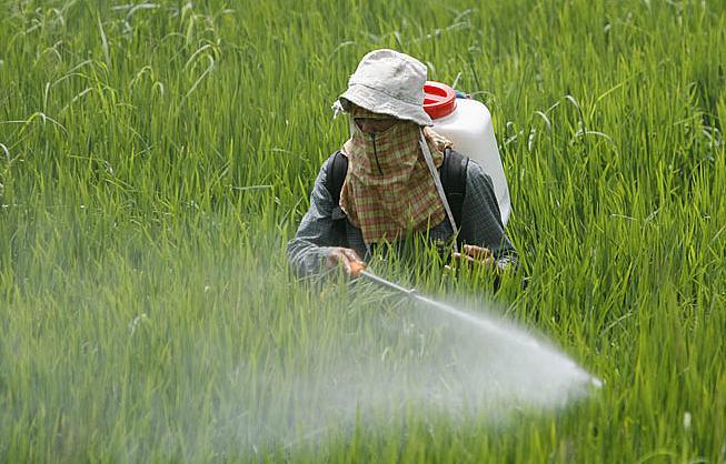 التوعية بمخاطر المبيدات الفلاحية على الإنسان و البيئة