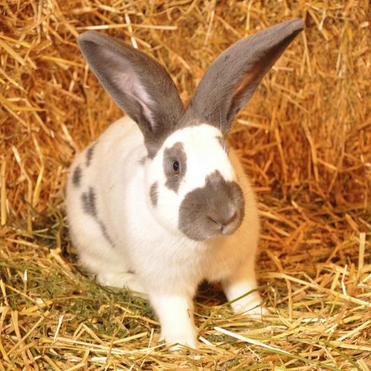 كيفية تسسير تربية الأرانب بطريقة عصرية.