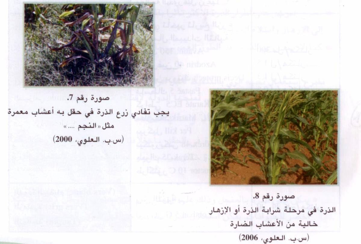 المقاومة المندمجة ضد الأعشاب الضارة بالنسبة لزراعة الذرة.